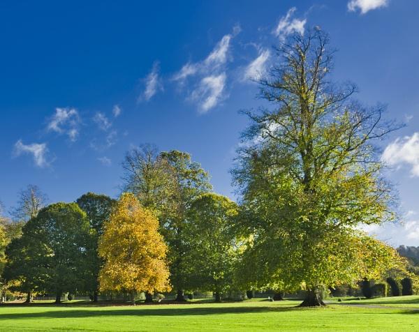Sudeley castle trees in Autumn by Skinwalker