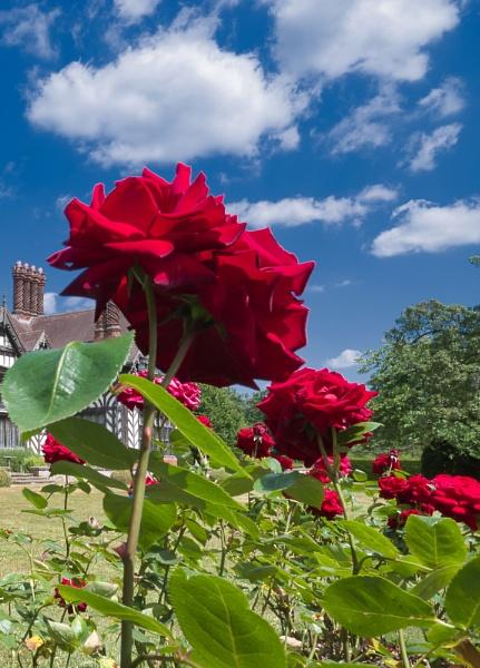 Ramblin Rose by Skinwalker