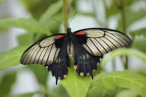 Botanical butterfly by Skinwalker