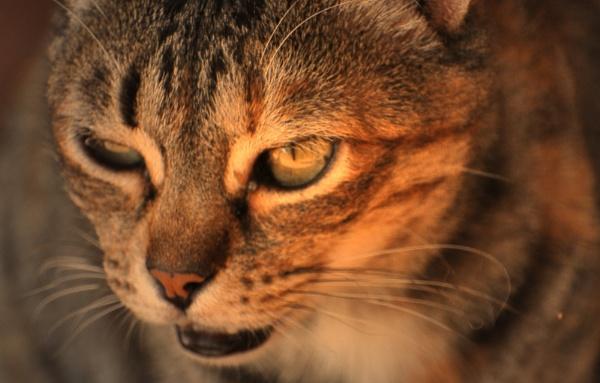 Cat poses (1)  !! by Chinga