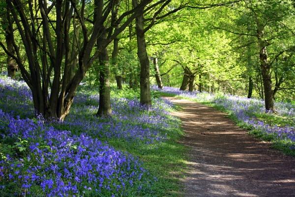 spring at langdon hills