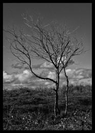 Photo : The monochrome tree