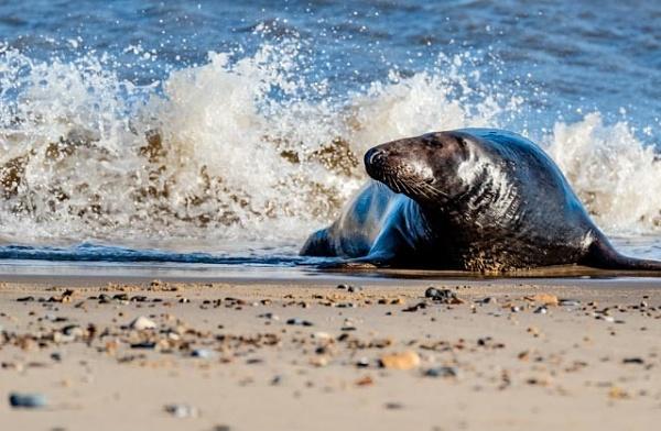 Splashing around by Steveindiss