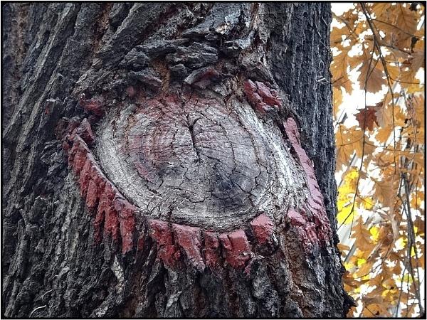 the eyeliner tree by FabioKeiner
