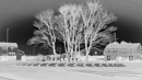 Trees and Roads in Negative