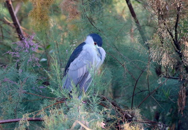 Chill Heron by AudiusLoudus