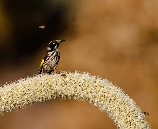 Fly past. by Heyneker