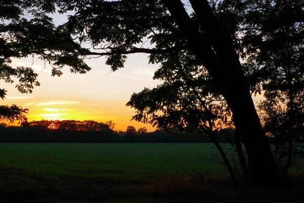 Autumnal Gleam Series #37 by PentaxBro