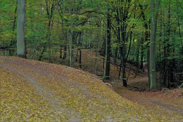 Autumnal Gleam Series #86 by PentaxBro