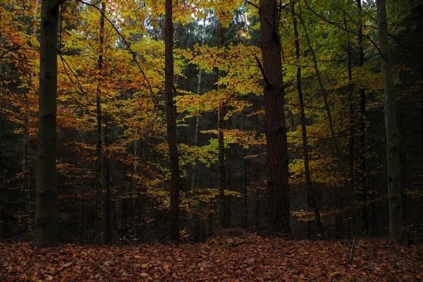 Autumnal Gleam Series #36 by PentaxBro