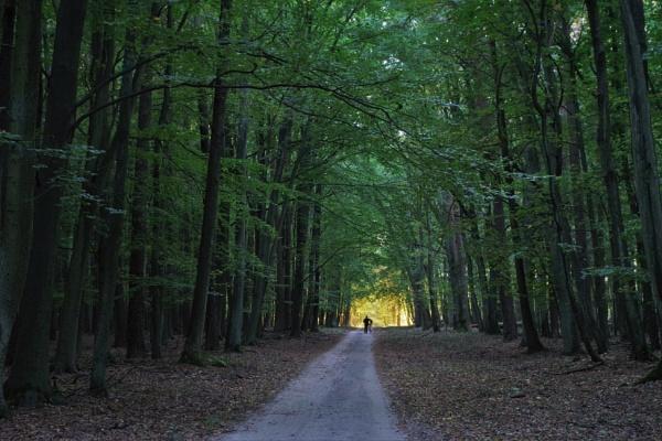 Autumnal Gleam Series #55A by PentaxBro