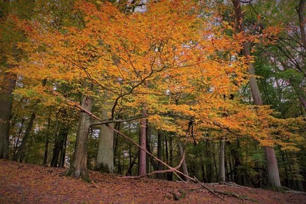 Autumnal Gleam Series #80 by PentaxBro