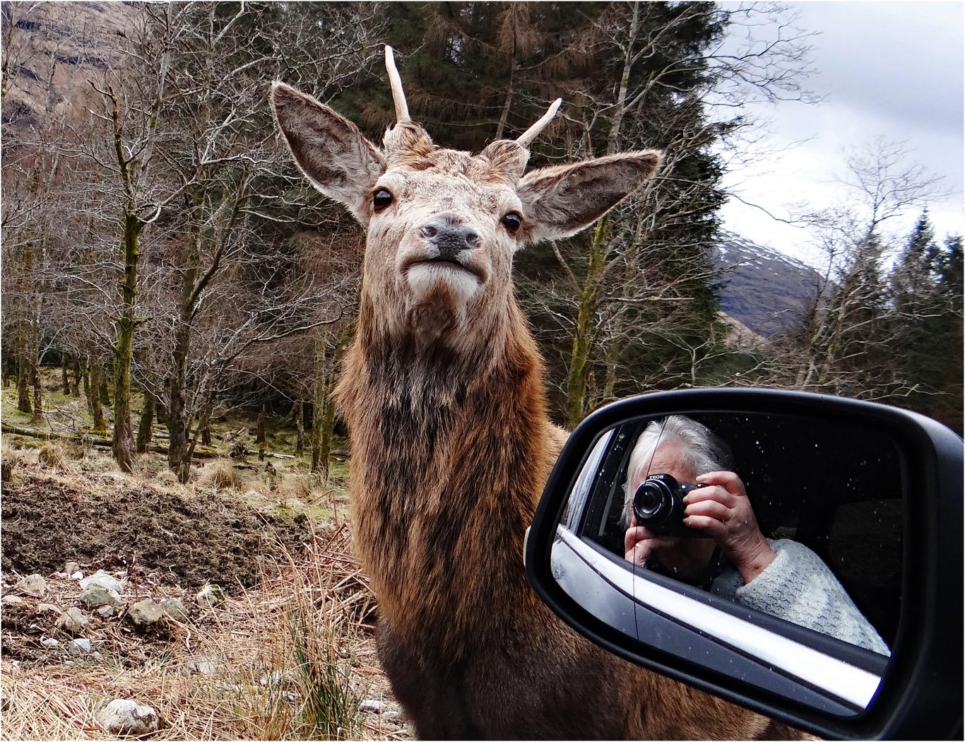 Highland Selfie