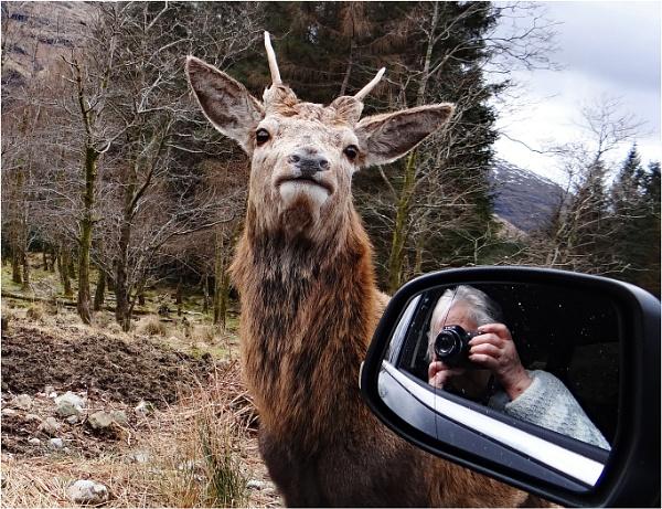 Highland Selfie by dven