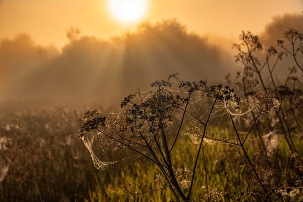 Spider Sunrise by douglasR