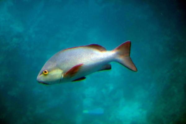 Barrier Fish