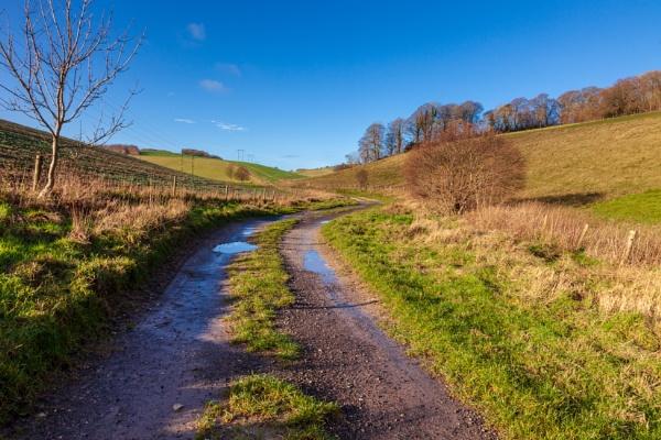 Wintry Dorset landscape by tonybridge