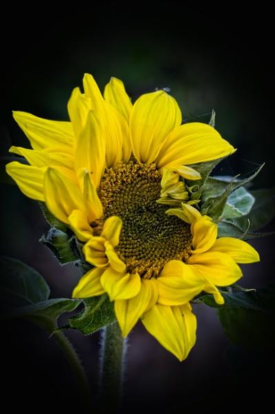 A little sunshine by CaroleS