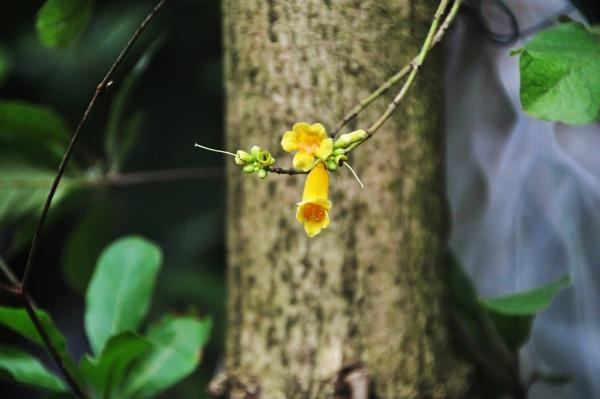 Delicate\'s - Florinarama (4) by Chinga