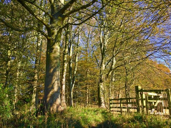 Etal woods by Drighlynne