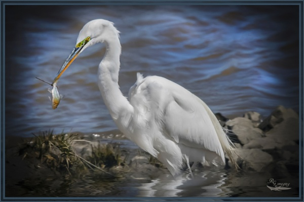 Just fishing by rgg