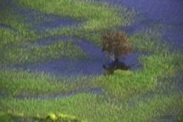 Lake Murray Impressionist