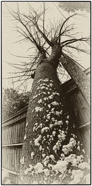 WINTER TREE by SOUL7