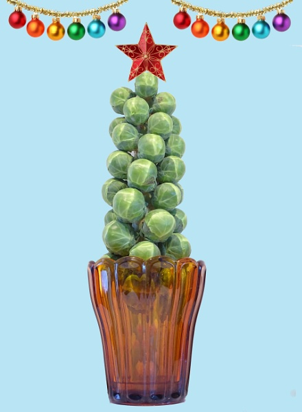 A sprout is not just for Christmas by Cephus