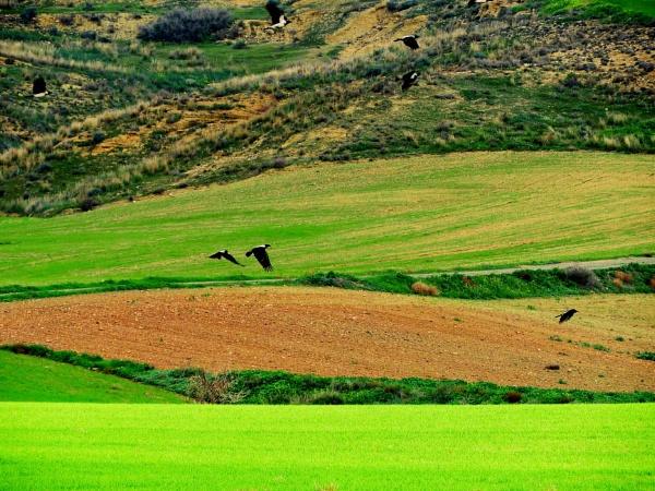 Cyprus: Landscape at Agios Ioannis by Savvas511