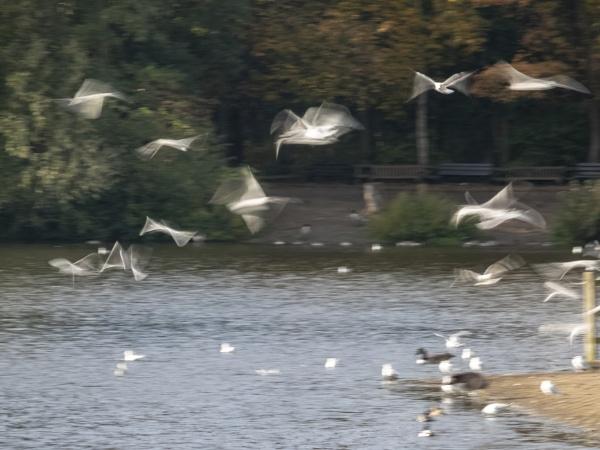 Flock of blurs by OverthehillPhil