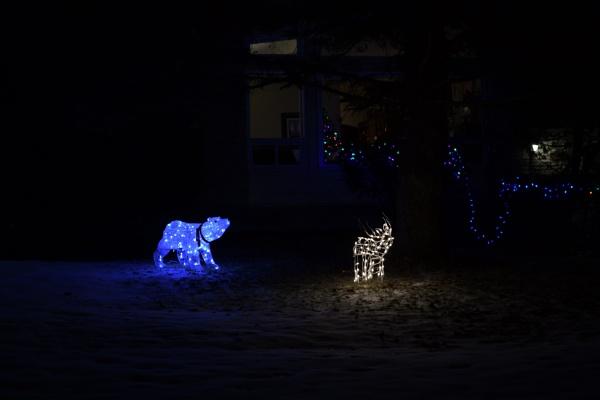 Polar Bear on the Hunt. by Rogi