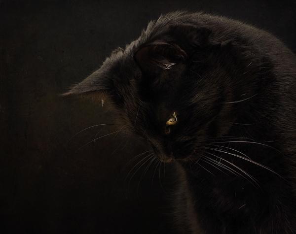 My Boy Ledley by cattyal