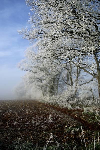 Winter Scene by pledwith