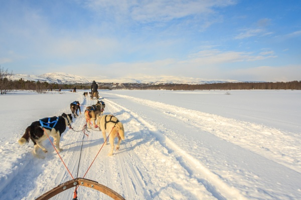 Dog sled adventure by SueLeonard