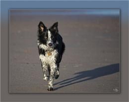 Ansel The Beach Bunny Post 1