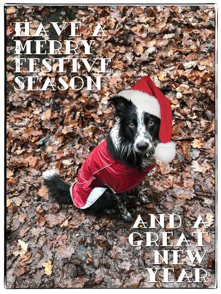 Season\'s Greetings by LynneJoyce