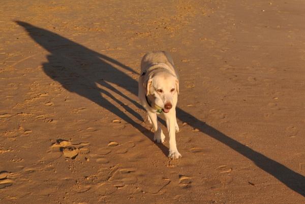 Dog shadows... by Chinga