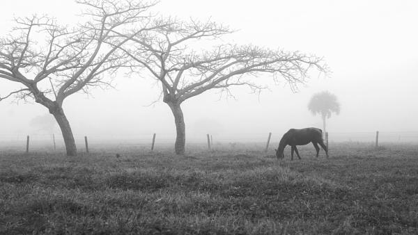 Morning Fog by 121PB