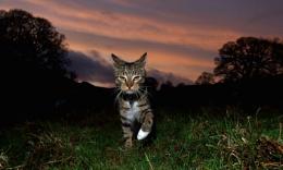 One kitty of the apocalypse