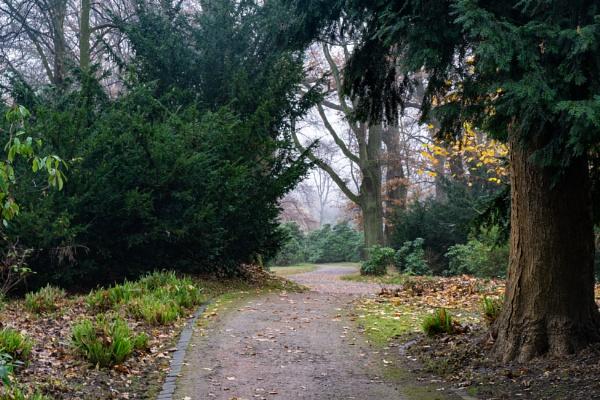 Path in park by rninov