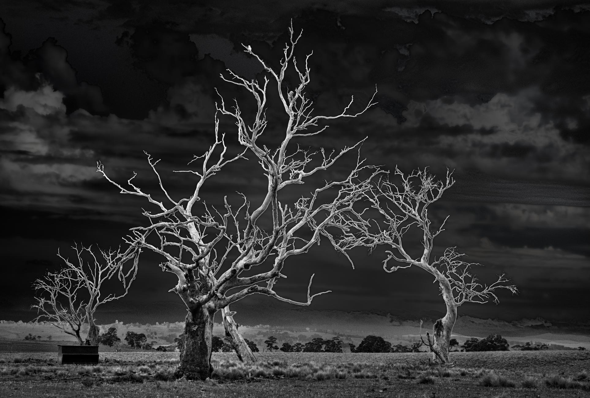 Die Back, High Monaro, New South Wales