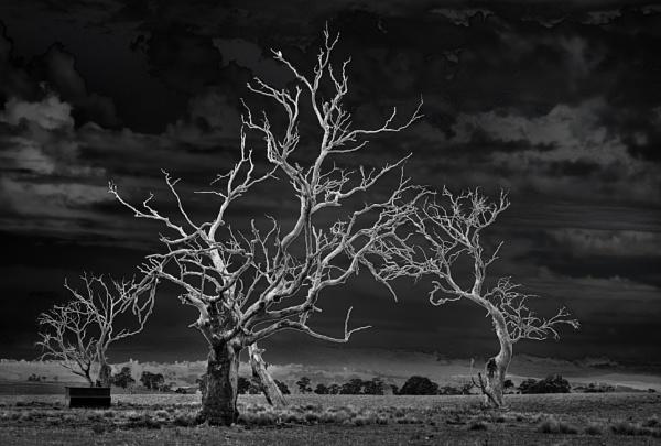 Die Back, High Monaro, New South Wales by BobinAus