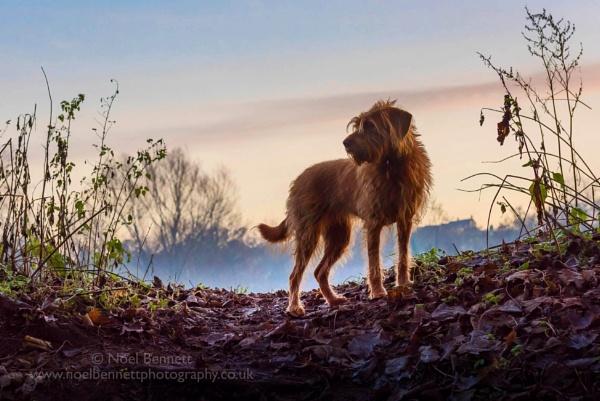 On Patrol by NoelBennettPhotography
