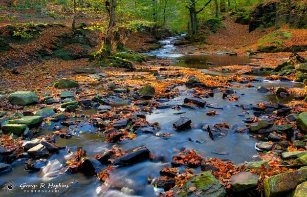 Roddlesworth Wood in Autumn Leaf by georgehopkins