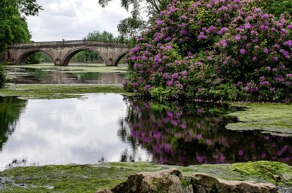 bridge by rocky41
