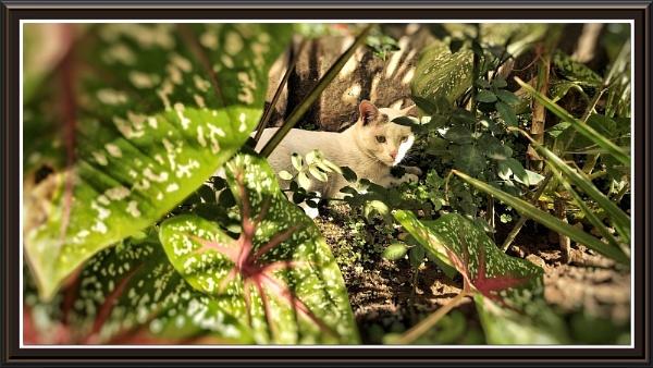Cat taking rest. by manazirhasan