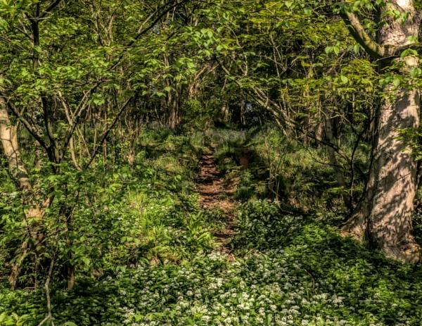 Hidden path by BillRookery