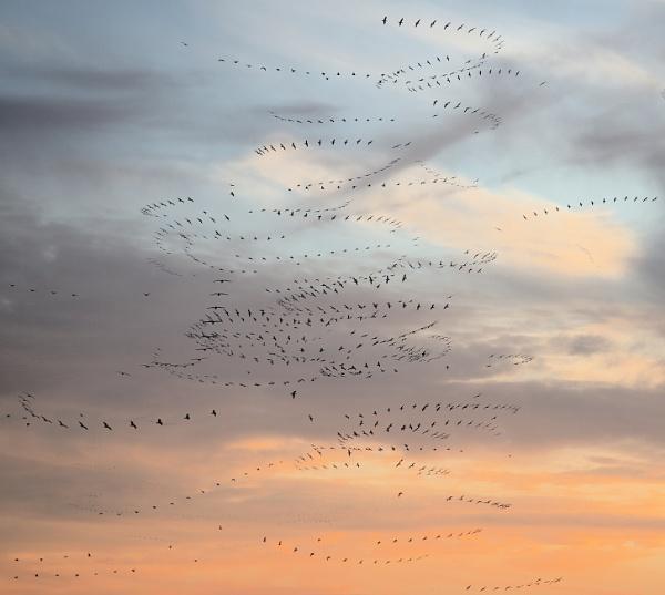 flight of fancy by alfpics