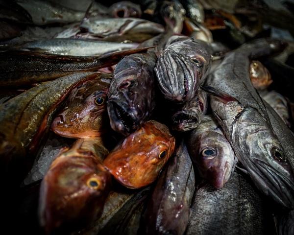 Something fishy going on! by ANIMAGEOFIRELAND
