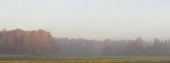Homeland in the haze f